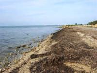 la costa, guardando verso Trapani - 17 febbraio 2007   - Marausa lido (3303 clic)