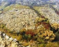 C/da Birgi Novo - i colori della scogliera - 25 maggio 2008  - Marsala (776 clic)