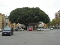 Piazza del Popolo - albero centenario e stazione degli autobus - 24 settembre 2007  - Marsala (1720 clic)