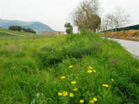le colline accanto la zona archeologica - 12 aprile 2007   - Segesta (2213 clic)