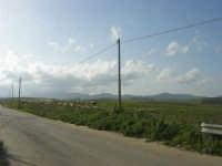 GALLITELLO - paesaggio rurale e gregge - 1 marzo 2009   - Alcamo (2221 clic)