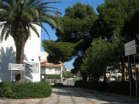 nel giardino dell'I.C. Pascoli - 13 febbraio 2008  - Castellammare del golfo (557 clic)