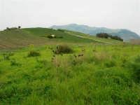 le colline accanto la zona archeologica - 12 aprile 2007   - Segesta (2112 clic)