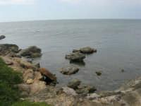 Capo Lilybeo - 24 settembre 2007  - Marsala (900 clic)