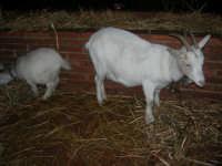 Presepe Vivente curato dall'Istituto Comprensivo G. Pascoli (76) - 22 dicembre 2007   - Castellammare del golfo (561 clic)