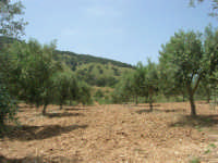 Baglio Ardigna - panorama - 17 maggio 2009  - Salemi (2519 clic)