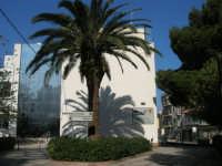 nel giardino dell'I.C. Pascoli - 13 febbraio 2008  - Castellammare del golfo (600 clic)