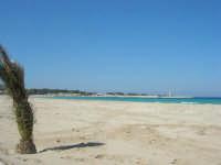 la spiaggia, il mare, il faro - 24 febbraio 2008   - San vito lo capo (533 clic)