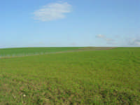 GALLITELLO - paesaggio rurale - 1 marzo 2009   - Alcamo (2777 clic)