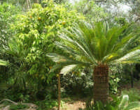 giardino del Baglio Trinità - 22 aprile 2007    - Castelvetrano (855 clic)