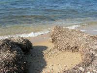 alghe in riva al mare - 27 gennaio 2008  - Marausa lido (1562 clic)