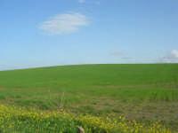 GALLITELLO - paesaggio rurale - 1 marzo 2009   - Alcamo (3000 clic)