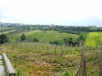 campagna alcamese e case di periferia - 23 febbraio 2009   - Alcamo (2234 clic)