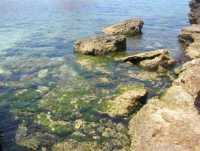 Golfo del Cofano: un mare stupendo! - 4 luglio 2009   - San vito lo capo (900 clic)