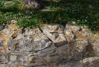 Villa Comunale Balio - particolare di un sedile in pietra - 1 maggio 2008   - Erice (896 clic)