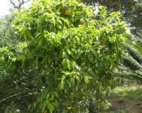 giardino del Baglio Trinità - 22 aprile 2007    - Castelvetrano (960 clic)