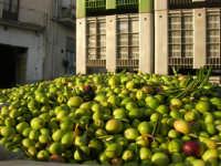 Tempo di raccolta di olive - 9 novembre 2008  - Caltabellotta (4441 clic)