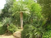 giardino del Baglio Trinità - 22 aprile 2007    - Castelvetrano (914 clic)
