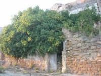 ruderi del paese distrutto dal terremoto del gennaio 1968 - ficaia - 2 ottobre 2007    - Poggioreale (806 clic)