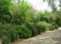 giardino del Baglio Trinità - 22 aprile 2007    - Castelvetrano (888 clic)