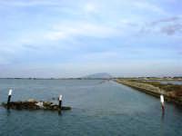 Riserva delle Isole dello Stagnone di Marsala - All'orizzonte Trapani ed il Monte Erice - 17 febbraio 2007   - Marsala (1632 clic)