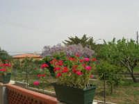 colori di primavera - 10 aprile 2008   - Alcamo (618 clic)