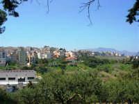 alberi d'ulivo e panorama della periferia - 18 aprile 2007  - Alcamo (1073 clic)