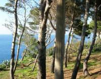 la baia di Guidaloca - 1 maggio 2007  - Castellammare del golfo (606 clic)