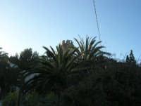 baia di Guidaloca: quasi nascosta dalle palme la torre di avvistamento - 3 marzo 2008  - Castellammare del golfo (565 clic)