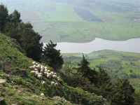 panorama: gregge di pecore sul dirupo e lago artificiale di Chiusa Sclafani - 23 aprile 2006   - Prizzi (2419 clic)