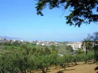 alberi d'ulivo e panorama della periferia - 18 aprile 2007  - Alcamo (975 clic)