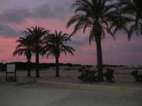 le palme sulla spiaggia - 27 gennaio 2008  - San vito lo capo (633 clic)