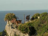 panorama e caprette - 20 maggio 2007  - San vito lo capo (640 clic)