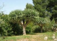 giardino del Baglio Trinità - 22 aprile 2007    - Castelvetrano (804 clic)