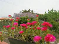 colori di primavera - 10 aprile 2008   - Alcamo (858 clic)
