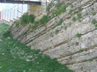 rocce nei pressi dell'anfiteatro - 23 aprile 2006   - Prizzi (1989 clic)