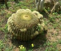 giardino del Baglio Trinità - 22 aprile 2007    - Castelvetrano (805 clic)
