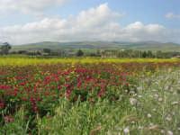 la campagna a primavera - 3 maggio 2009  - Fulgatore (1727 clic)