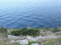 Riserva Naturale Orientata Zingaro - 24 febbraio 2008   - Riserva dello zingaro (626 clic)