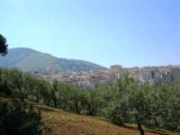 alberi d'ulivo, panorama della periferia e Monte Bonifato - 18 aprile 2007  - Alcamo (1075 clic)