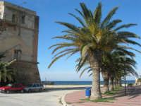 Torre di avvistamento e palme sul lungomare - 27 gennaio 2008  - Marausa lido (1468 clic)