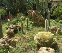 giardino del Baglio Trinità - 22 aprile 2007    - Castelvetrano (834 clic)