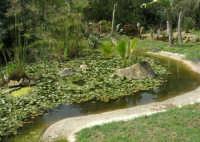 giardino del Baglio Trinità - 22 aprile 2007    - Castelvetrano (821 clic)