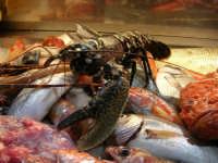pesci in esposizione presso il ristorante La Cambusa - 19 settembre 2007  - Castellammare del golfo (1929 clic)