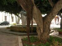 ex Quartiere Spagnolo, attuale sede del Palazzo del Comune: la fontana al centro dell'atrio, circondata da alberi - 24 settembre 2007  - Marsala (1042 clic)
