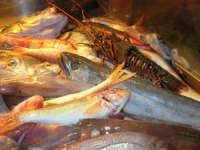 pesci in esposizione presso il ristorante La Cambusa - 19 settembre 2007  - Castellammare del golfo (1800 clic)