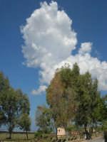 C/da Digerbato - Tenuta Volpara - 27 aprile 2008   - Marsala (905 clic)
