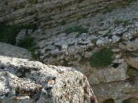 rocce nei pressi dell'anfiteatro - 23 aprile 2006   - Prizzi (2200 clic)