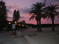 le palme sulla spiaggia - 27 gennaio 2008  - San vito lo capo (622 clic)