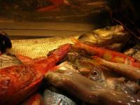 pesci in esposizione presso il ristorante La Cambusa - 19 settembre 2007   - Castellammare del golfo (1685 clic)